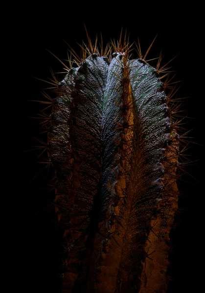 Kaktus_08